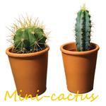 Z11 cactus assortiment geld inzamelen
